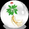 Косметика из кореи с корнем женьшеня