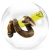 Корейская косметика со змеиным ядом